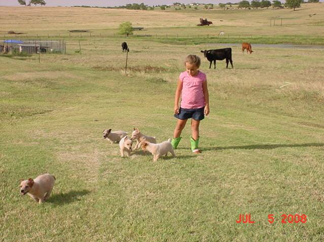 puppies - pasture -girls -best friend - cattle - black -red
