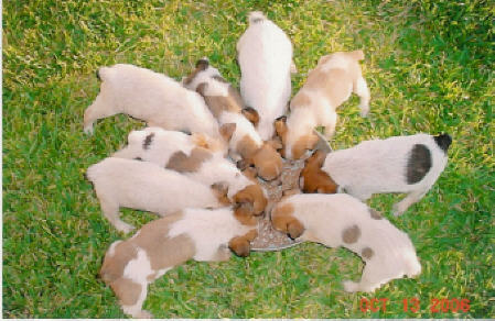 puppies - food - nine - texas