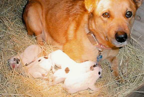 dogs - mom - love - puppies
